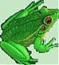 froggyboy604