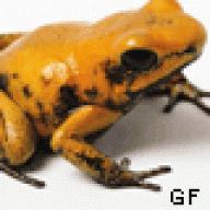 googlefrog