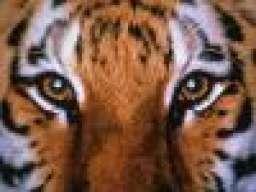 TigersTales