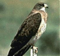 Brownhawk.com