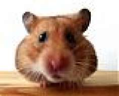 the-hungry-hamster