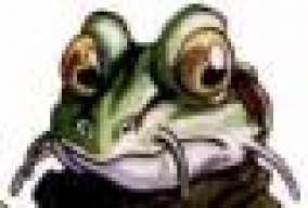Bullfrog245
