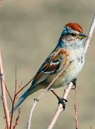 Sparrow0309