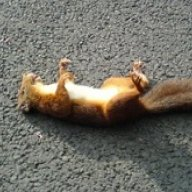 Deadsquirrel